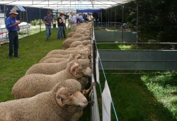 Ram sale at Whyworry Park